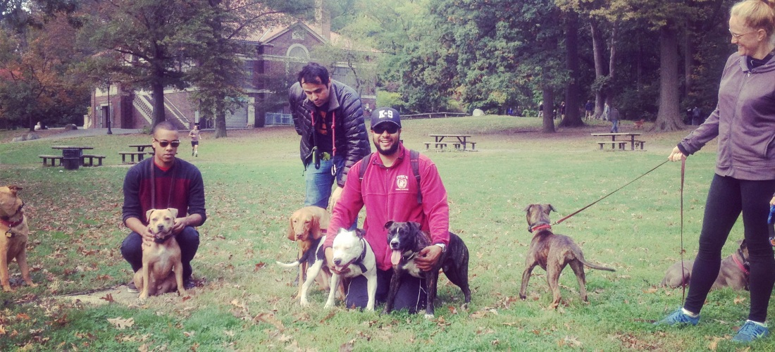 dog training – Minna Aslama Horowitz